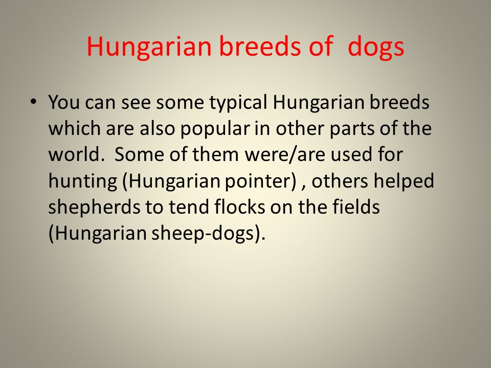 Hungarian breeds of dogs You can see some typical Hungarian breeds which are also popular in other parts of the world.