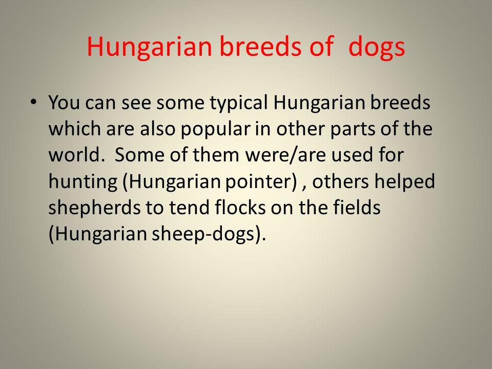 Magyar kutyafajták bélyegen Hungarian breeds on stamps