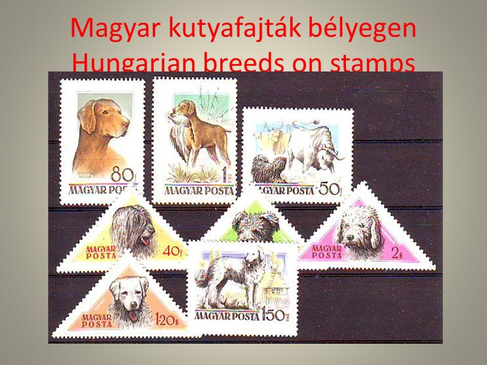 Magyar vizsla-Hungarian Pointer Hungarian Pointer is a medium size, short-coated, lightly built, lean dog.