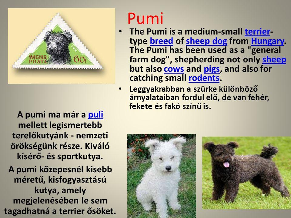 Pumi A pumi ma már a puli mellett legismertebb terelőkutyánk - nemzeti örökségünk része.