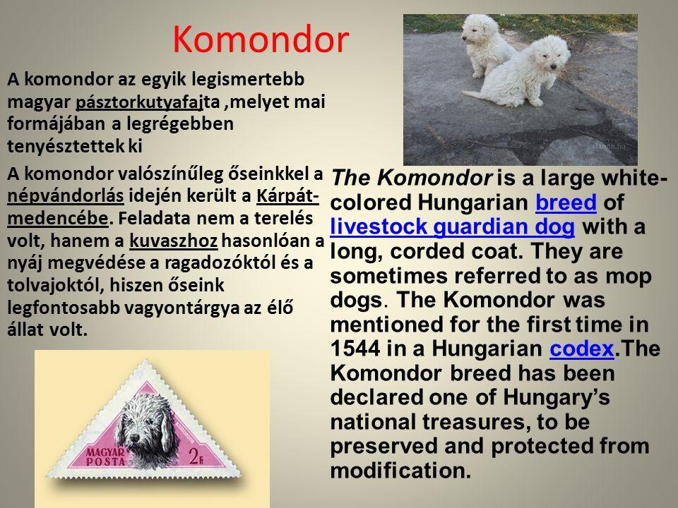 Komondor A komondor az egyik legismertebb magyar pásztorkutyafaj ta,melyet mai formájában a legrégebben tenyésztettek ki A komondor valószínűleg őseinkkel a népvándorlás idején került a Kárpát- medencébe.
