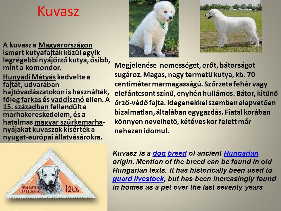 Kuvasz A kuvasz a Magyarországon ismert kutyafajták közül egyik legrégebbi nyájőrző kutya, ősibb, mint a komondor.