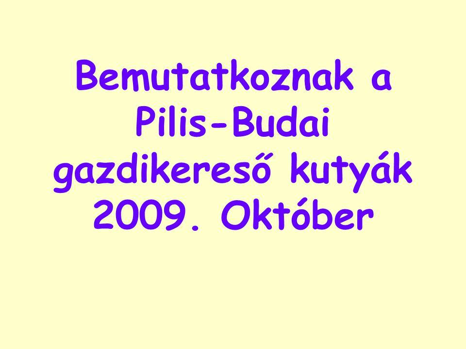 Bemutatkoznak a Pilis-Budai gazdikereső kutyák 2009. Október