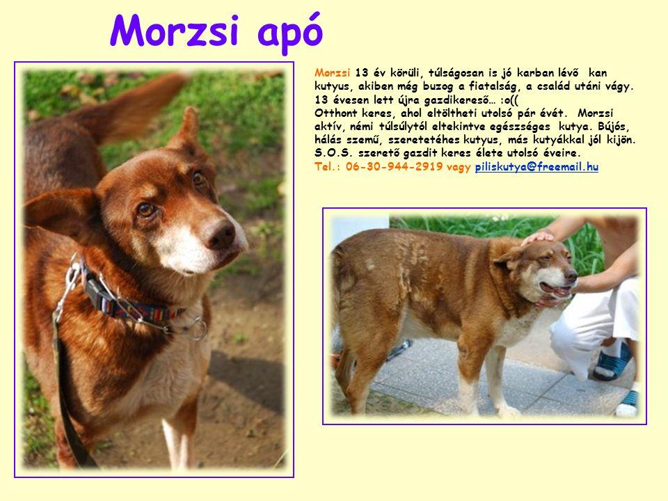 Morzsi apó Morzsi 13 év körüli, túlságosan is jó karban lévő kan kutyus, akiben még buzog a fiatalság, a család utáni vágy. 13 évesen lett újra gazdik