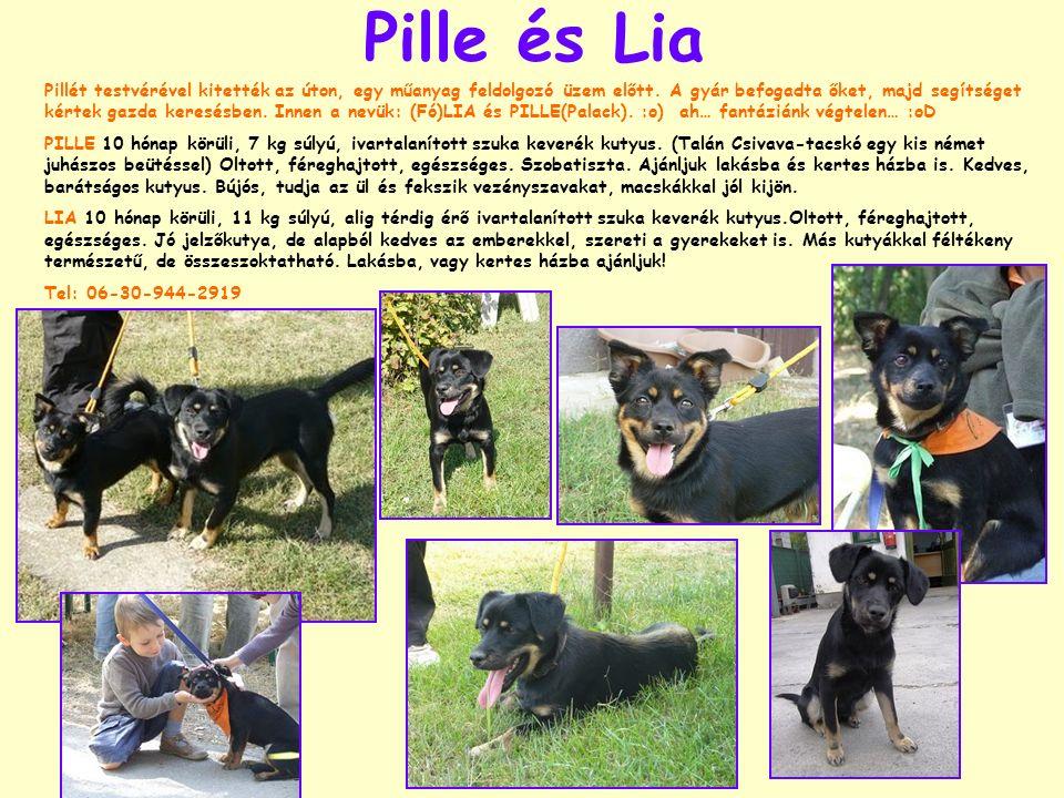 Pille és Lia Pillét testvérével kitették az úton, egy műanyag feldolgozó üzem előtt. A gyár befogadta őket, majd segítséget kértek gazda keresésben. I
