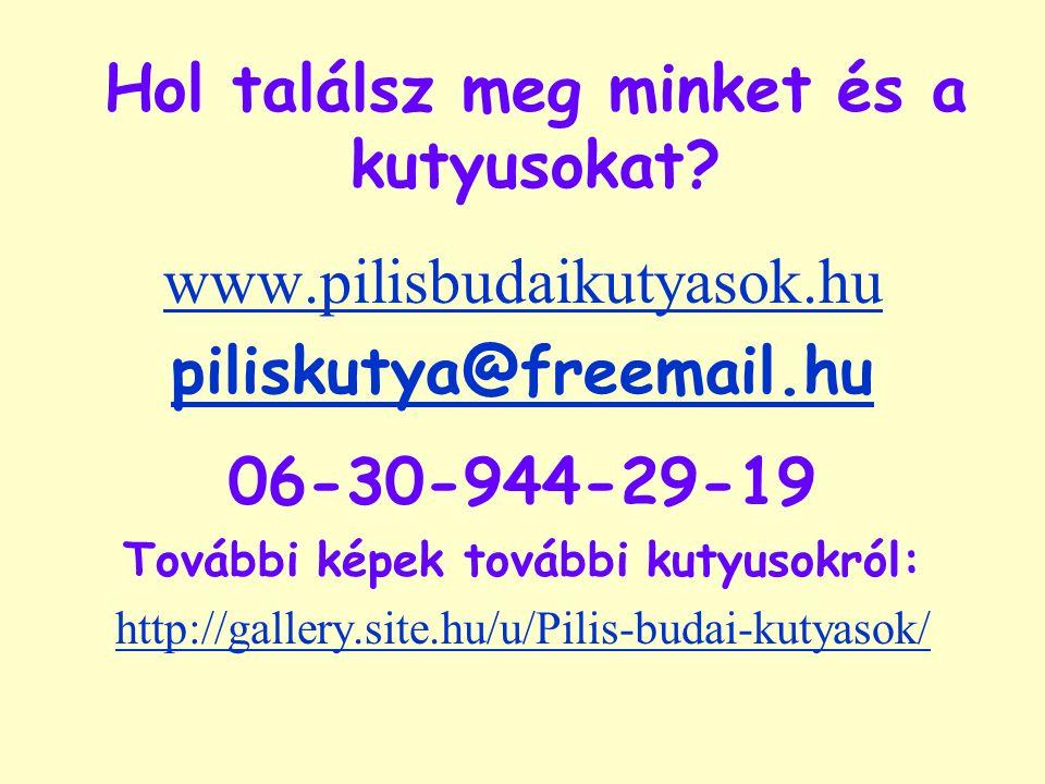 Hol találsz meg minket és a kutyusokat? www.pilisbudaikutyasok.hu piliskutya@freemail.hu 06-30-944-29-19 További képek további kutyusokról: http://gal