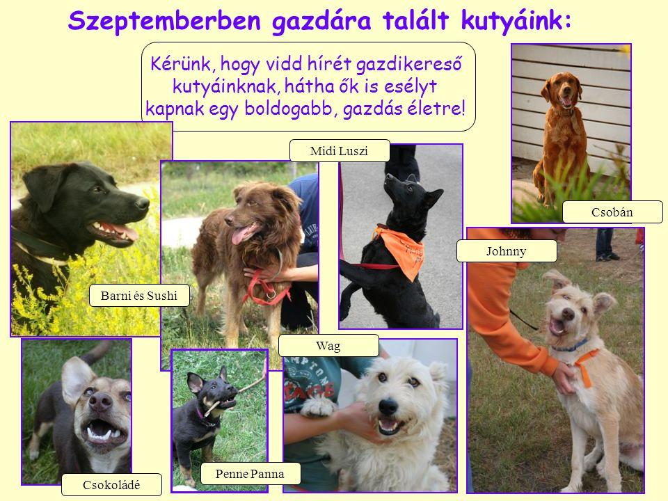 Szeptemberben gazdára talált kutyáink: Kérünk, hogy vidd hírét gazdikereső kutyáinknak, hátha ők is esélyt kapnak egy boldogabb, gazdás életre.