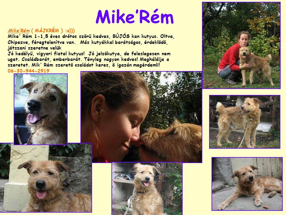 Mike'Rém Mike'Rém ( MÁJKRÉM ) :o))) Mike' Rém 1-1,5 éves drótos szőrű kedves, BÚJÓS kan kutyus. Oltva, Chipezve, féregtelenítve van. Más kutyákkal bar