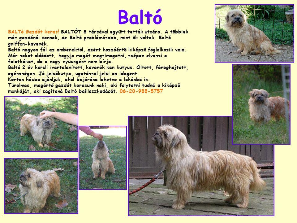 Baltó BALTó Gazdát keres. BALTÓT 8 társával együtt tették utcára.