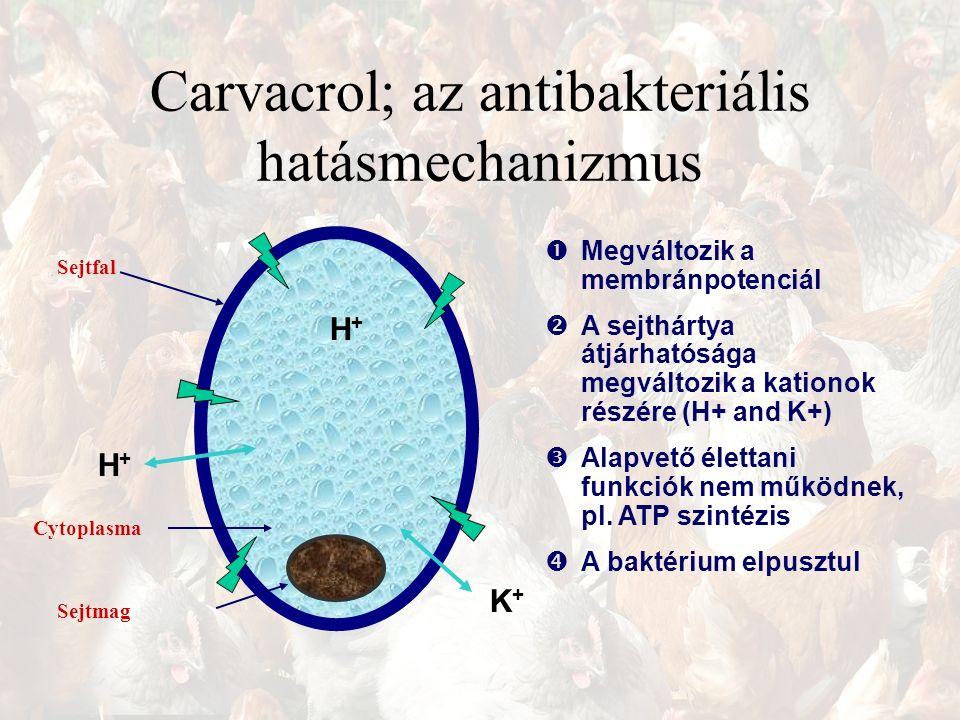 Carvacrol; az antibakteriális hatásmechanizmus Sejtfal Sejtmag Cytoplasma H+H+ K+K+ H+H+  Megváltozik a membránpotenciál  A sejthártya átjárhatósága megváltozik a kationok részére (H+ and K+)  Alapvető élettani funkciók nem működnek, pl.