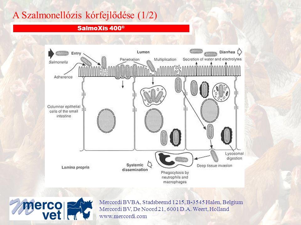 A Szalmonellózis kórfejlődése (1/2) SalmoXis 400 ® Mercordi BVBA, Stadsbeemd 1215, B-3545 Halen, Belgium Mercordi BV, De Noord 21, 6001 D.A.