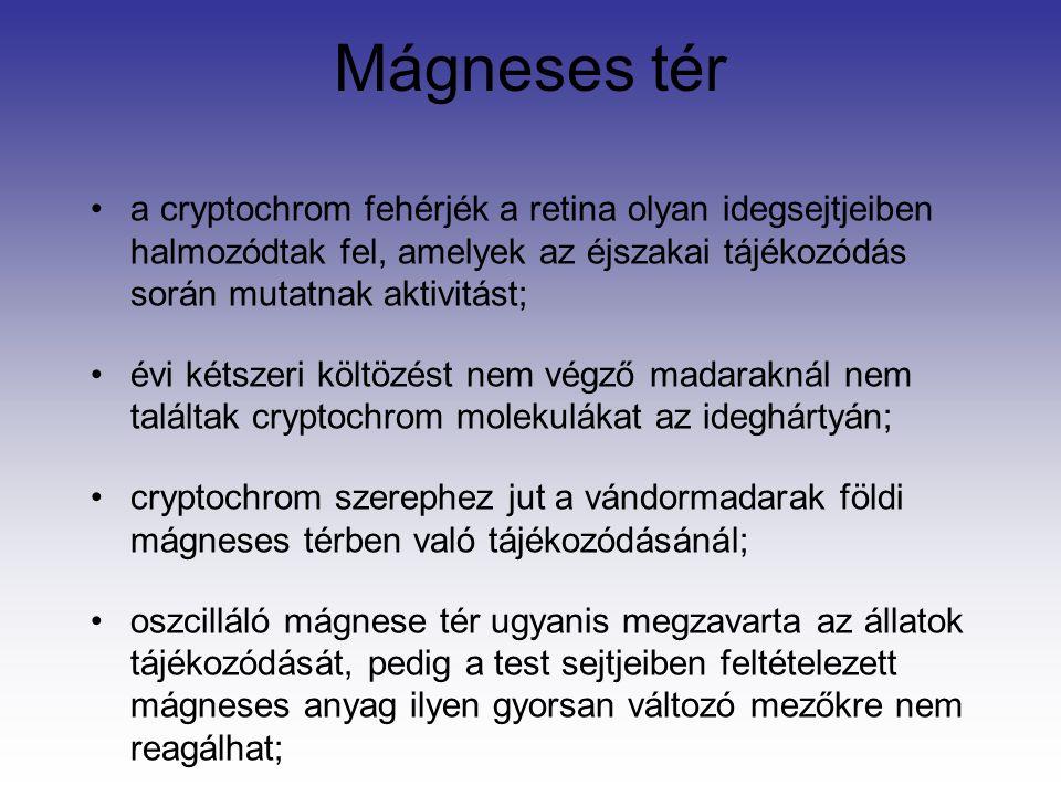 Mágneses tér a cryptochrom fehérjék a retina olyan idegsejtjeiben halmozódtak fel, amelyek az éjszakai tájékozódás során mutatnak aktivitást; évi kétszeri költözést nem végző madaraknál nem találtak cryptochrom molekulákat az ideghártyán; cryptochrom szerephez jut a vándormadarak földi mágneses térben való tájékozódásánál; oszcilláló mágnese tér ugyanis megzavarta az állatok tájékozódását, pedig a test sejtjeiben feltételezett mágneses anyag ilyen gyorsan változó mezőkre nem reagálhat;