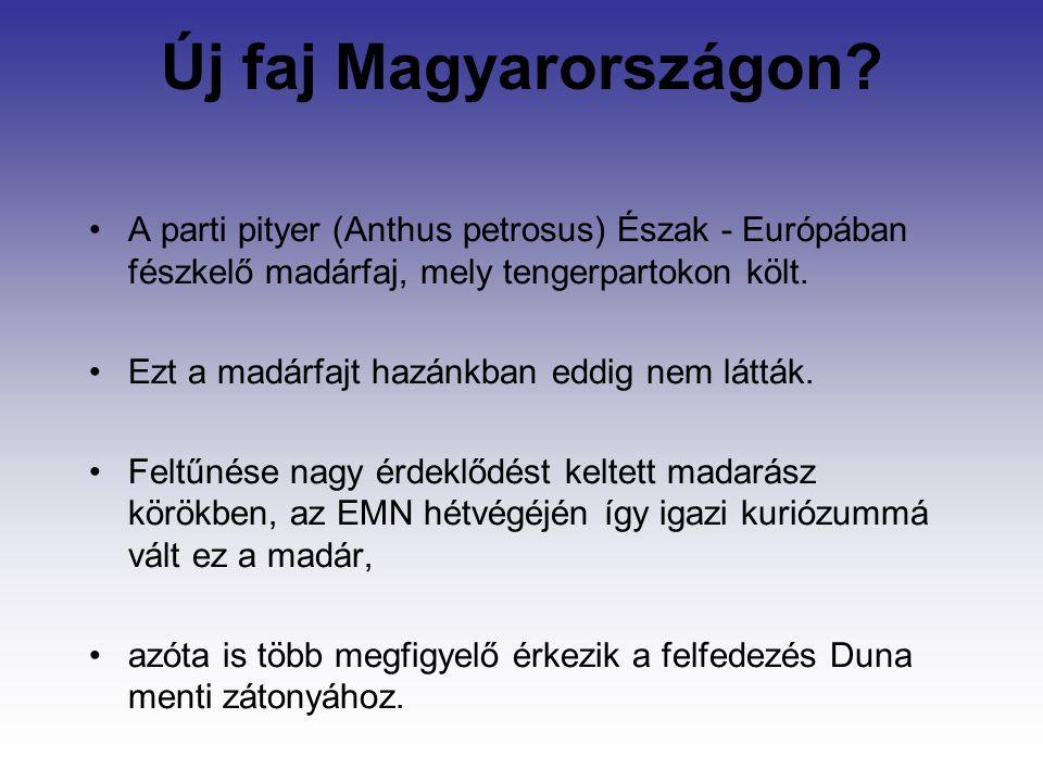 Új faj Magyarországon.