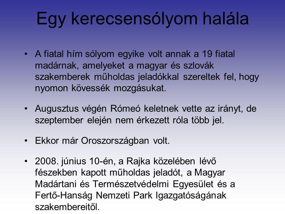 Egy kerecsensólyom halála A fiatal hím sólyom egyike volt annak a 19 fiatal madárnak, amelyeket a magyar és szlovák szakemberek műholdas jeladókkal szereltek fel, hogy nyomon kövessék mozgásukat.