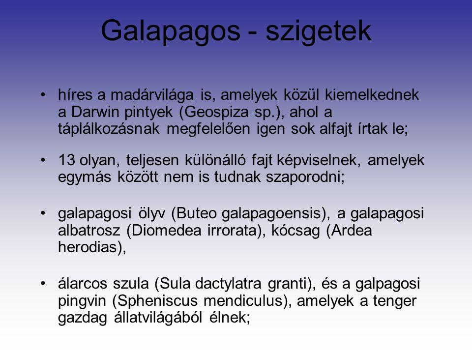 Galapagos - szigetek híres a madárvilága is, amelyek közül kiemelkednek a Darwin pintyek (Geospiza sp.), ahol a táplálkozásnak megfelelően igen sok alfajt írtak le; 13 olyan, teljesen különálló fajt képviselnek, amelyek egymás között nem is tudnak szaporodni; galapagosi ölyv (Buteo galapagoensis), a galapagosi albatrosz (Diomedea irrorata), kócsag (Ardea herodias), álarcos szula (Sula dactylatra granti), és a galpagosi pingvin (Spheniscus mendiculus), amelyek a tenger gazdag állatvilágából élnek;