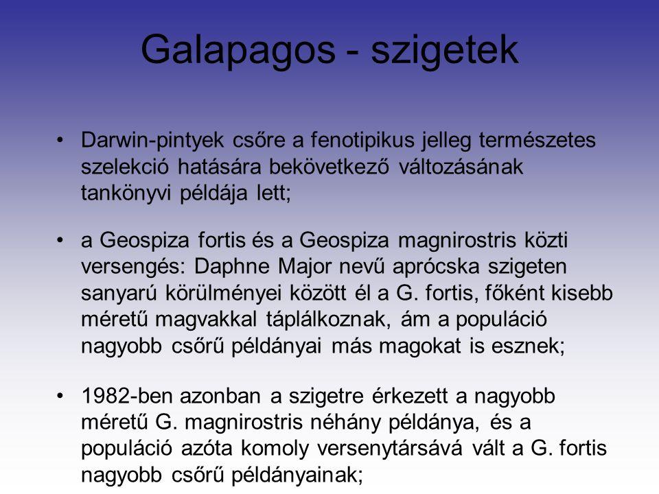 Galapagos - szigetek Darwin-pintyek csőre a fenotipikus jelleg természetes szelekció hatására bekövetkező változásának tankönyvi példája lett; a Geospiza fortis és a Geospiza magnirostris közti versengés: Daphne Major nevű aprócska szigeten sanyarú körülményei között él a G.