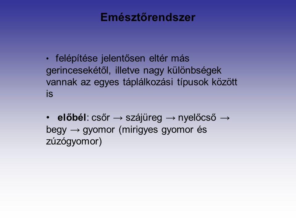 Emésztőrendszer felépítése jelentősen eltér más gerincesekétől, illetve nagy különbségek vannak az egyes táplálkozási típusok között is előbél: csőr → szájüreg → nyelőcső → begy → gyomor (mirigyes gyomor és zúzógyomor)