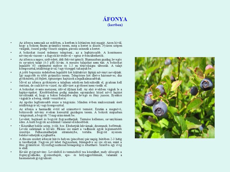 ÁFONYA (kertben) Az áfonya nemcsak az erdőben, a kertben is kitűnően érzi magát. Azon kívül, hogy a bokron finom gyümölcs terem, még a kertet is díszí