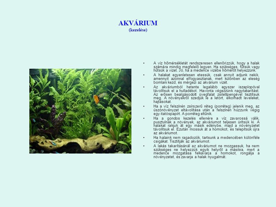 AKVÁRIUM (kezelése) A víz hőmérsékletét rendszeresen ellenőrizzük, hogy a halak számára mindig megfelelő legyen.