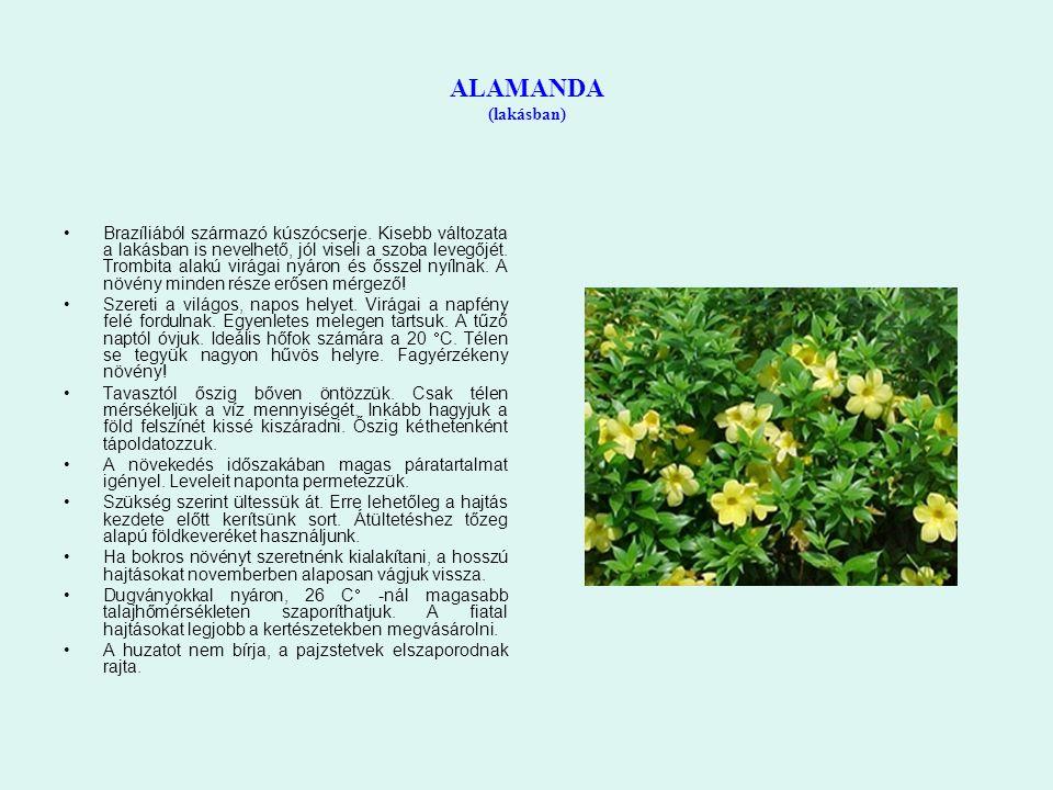 ALAMANDA (lakásban) Brazíliából származó kúszócserje. Kisebb változata a lakásban is nevelhető, jól viseli a szoba levegőjét. Trombita alakú virágai n