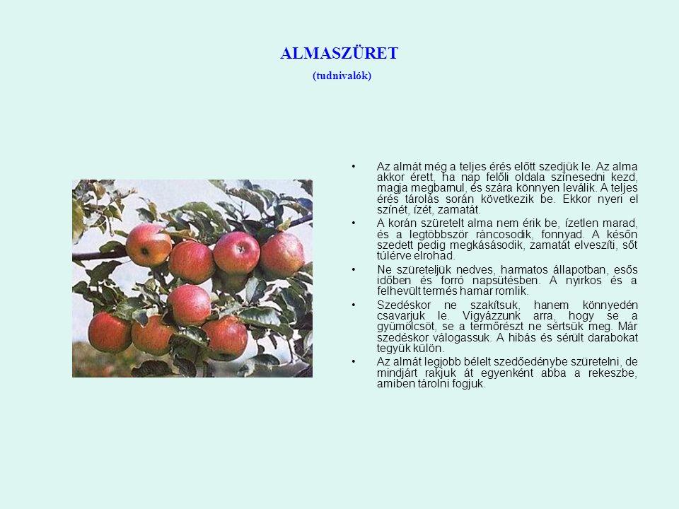 ALMASZÜRET (tudnivalók) Az almát még a teljes érés előtt szedjük le. Az alma akkor érett, ha nap felőli oldala színesedni kezd, magja megbarnul, és sz