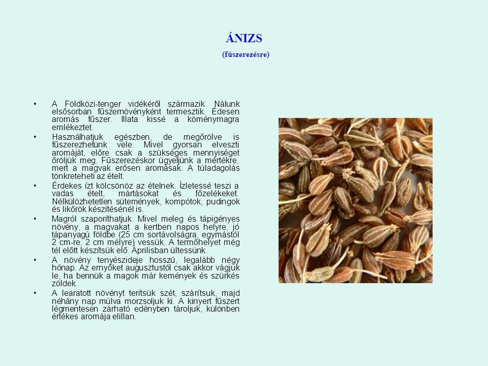 ÁNIZS (fűszerezésre) A Földközi-tenger vidékéről származik. Nálunk elsősorban fűszernövényként termesztik. Édesen aromás fűszer. Illata kissé a kömény