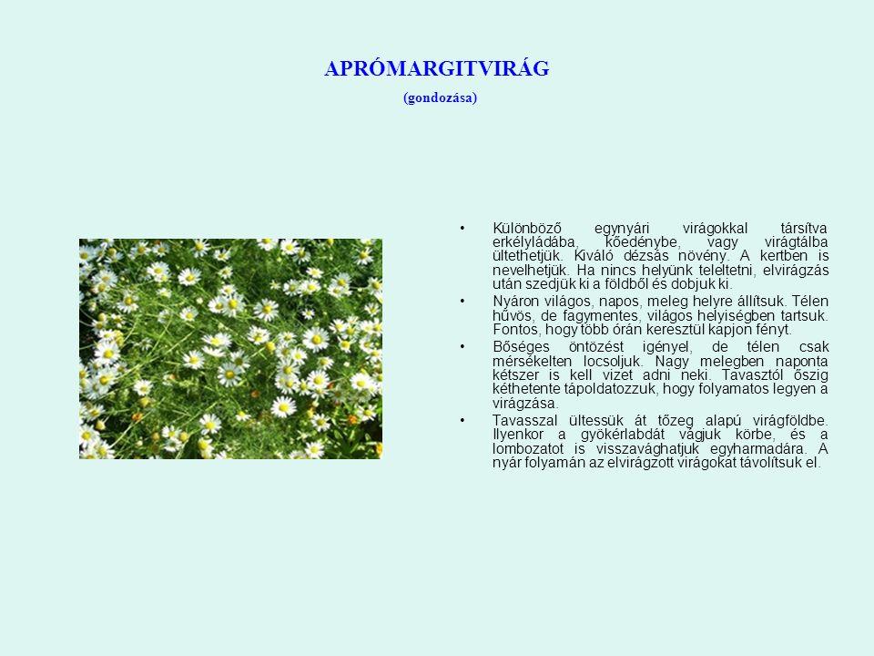 APRÓMARGITVIRÁG (gondozása) Különböző egynyári virágokkal társítva erkélyládába, kőedénybe, vagy virágtálba ültethetjük. Kiváló dézsás növény. A kertb