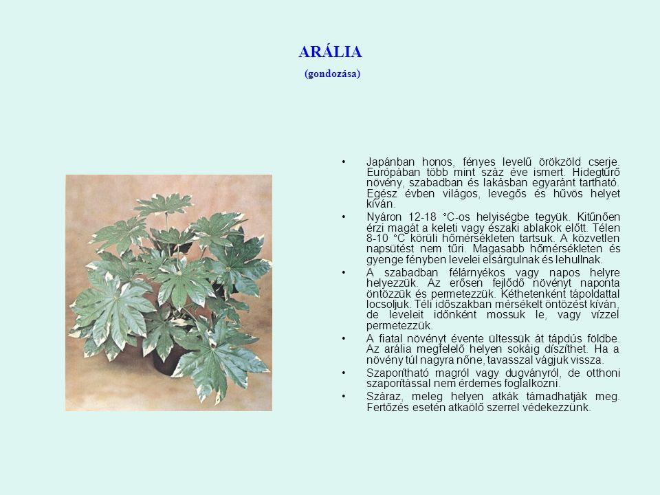 ARÁLIA (gondozása) Japánban honos, fényes levelű örökzöld cserje. Európában több mint száz éve ismert. Hidegtűrő növény, szabadban és lakásban egyarán