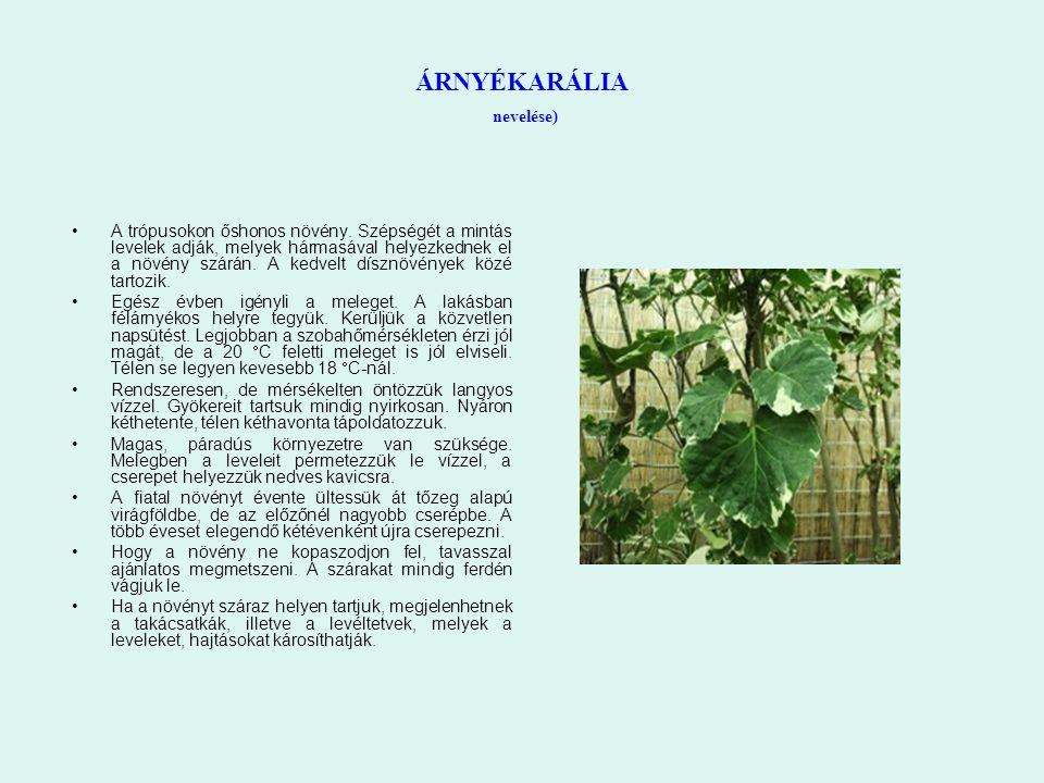 ÁRNYÉKARÁLIA nevelése) A trópusokon őshonos növény. Szépségét a mintás levelek adják, melyek hármasával helyezkednek el a növény szárán. A kedvelt dís