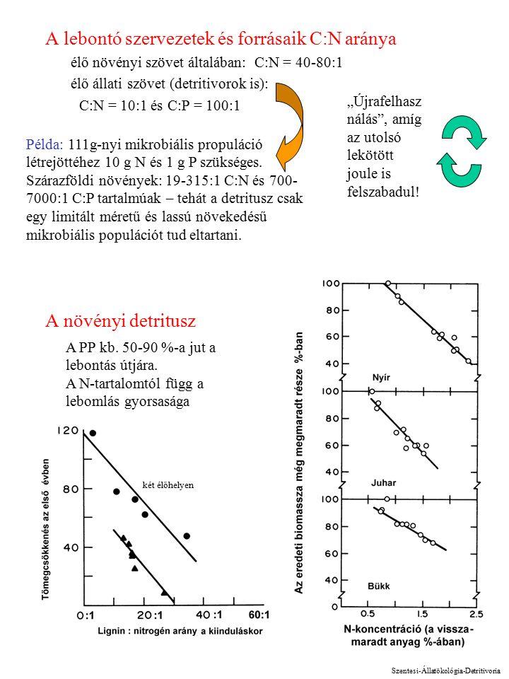 """6 A lebontó szervezetek és forrásaik C:N aránya élő növényi szövet általában: C:N = 40-80:1 élő állati szövet (detritivorok is): C:N = 10:1 és C:P = 100:1 A növényi detritusz """"Újrafelhasz nálás , amíg az utolsó lekötött joule is felszabadul."""
