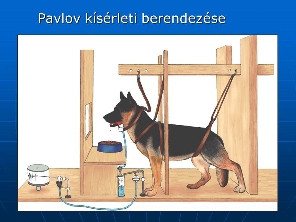 Pavlov kísérleti berendezése