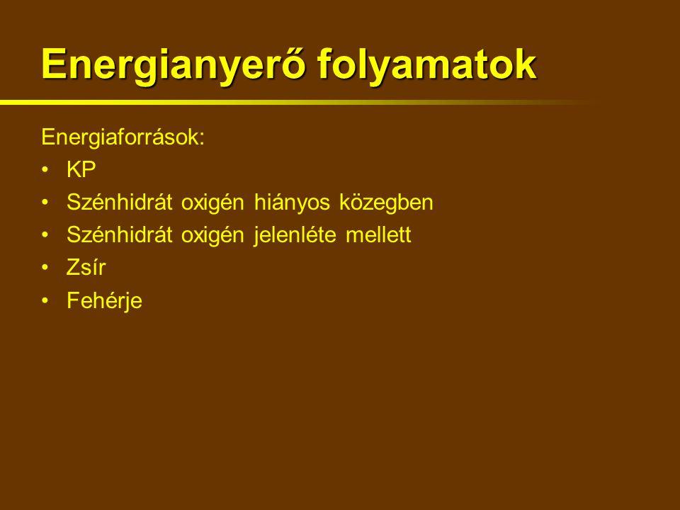 Energianyerő folyamatok Energiaforrások: KP Szénhidrát oxigén hiányos közegben Szénhidrát oxigén jelenléte mellett Zsír Fehérje
