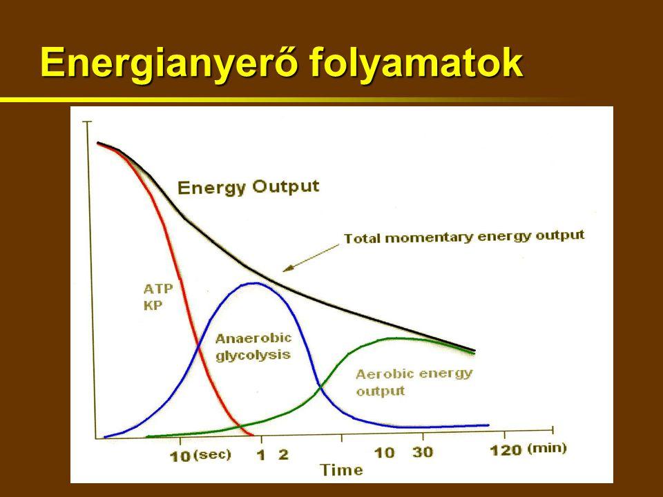 Energianyerő folyamatok