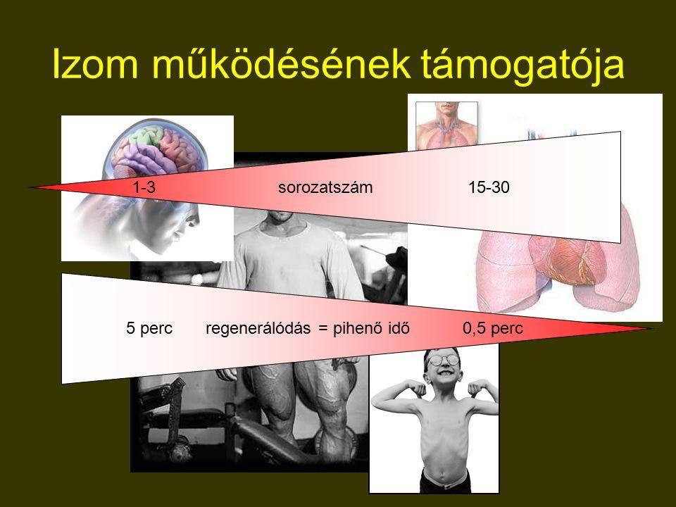 Izom működésének támogatója 5 perc regenerálódás = pihenő idő 0,5 perc 1-3 sorozatszám 15-30