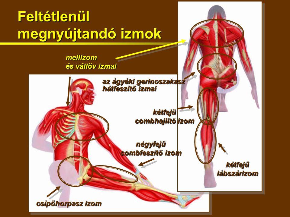 Feltétlenül megnyújtandó izmok csípőhorpasz izom mellizom és vállöv izmai kétfejűlábszárizom kétfejű combhajlító izom az ágyéki gerincszakasz hátfeszítő izmai négyfejű combfeszítő izom