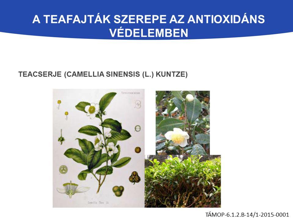 A TEAFAJTÁK SZEREPE AZ ANTIOXIDÁNS VÉDELEMBEN TEACSERJE (CAMELLIA SINENSIS (L.) KUNTZE) TÁMOP-6.1.2.B-14/1-2015-0001