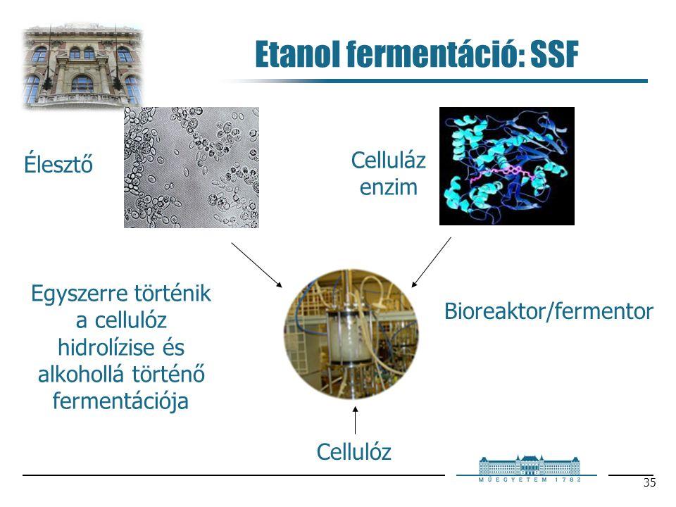 35 Etanol fermentáció: SSF Egyszerre történik a cellulóz hidrolízise és alkohollá történő fermentációja Élesztő Celluláz enzim Bioreaktor/fermentor Cellulóz