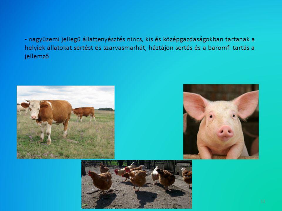 13 - nagyüzemi jellegű állattenyésztés nincs, kis és középgazdaságokban tartanak a helyiek állatokat sertést és szarvasmarhát, háztájon sertés és a baromfi tartás a jellemző