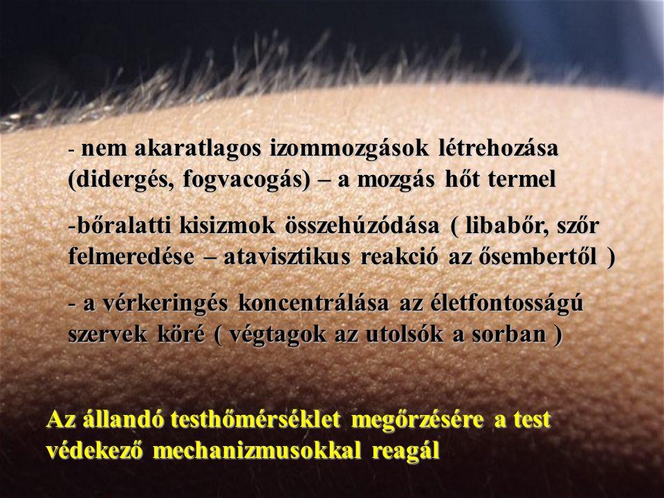 Az állandó testhőmérséklet megőrzésére a test védekező mechanizmusokkal reagál nem akaratlagos izommozgások létrehozása (didergés, fogvacogás) – a mozgás hőt termel - nem akaratlagos izommozgások létrehozása (didergés, fogvacogás) – a mozgás hőt termel -bőralatti kisizmok összehúzódása ( libabőr, szőr felmeredése – atavisztikus reakció az ősembertől ) - a vérkeringés koncentrálása az életfontosságú szervek köré ( végtagok az utolsók a sorban )