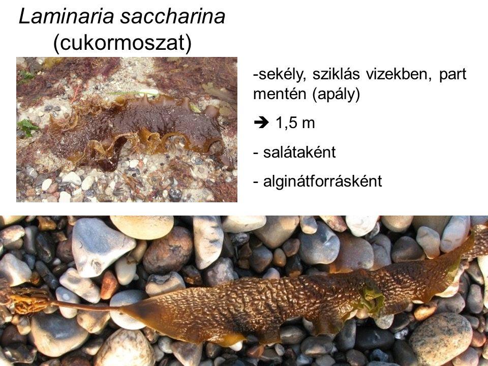 Cycadaceae - Cikászfélék Cycas sp.: cikazin (oxazo vegyület, glikozid) - májtoxikus BMAA: B-metilamin-L-alanin szágóliszt - toxikus anyagokat kimossák (előkezelés)