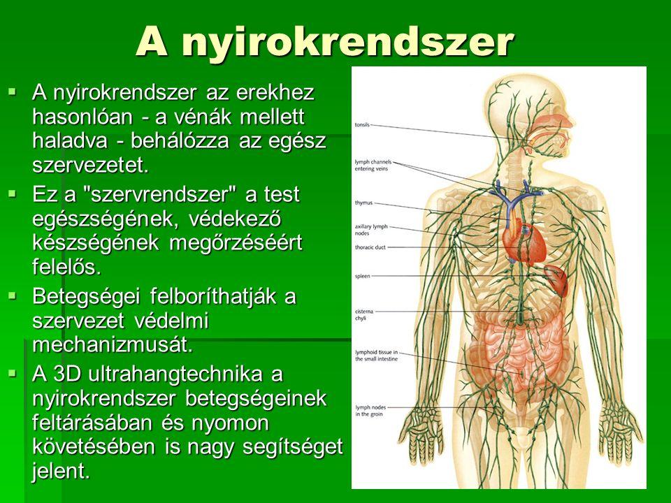 A nyirokrendszer  A nyirokrendszer az erekhez hasonlóan - a vénák mellett haladva - behálózza az egész szervezetet.  Ez a