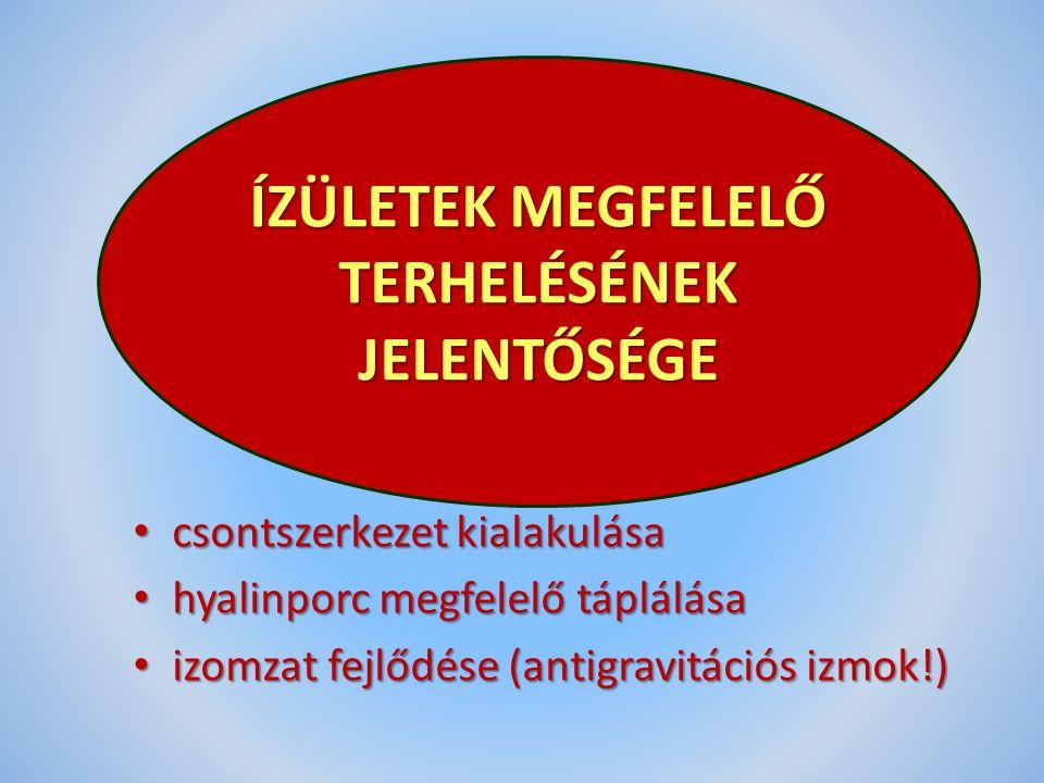 csontszerkezet kialakulása csontszerkezet kialakulása hyalinporc megfelelő táplálása hyalinporc megfelelő táplálása izomzat fejlődése (antigravitációs izmok!) izomzat fejlődése (antigravitációs izmok!) ÍZÜLETEK MEGFELELŐ TERHELÉSÉNEK JELENTŐSÉGE