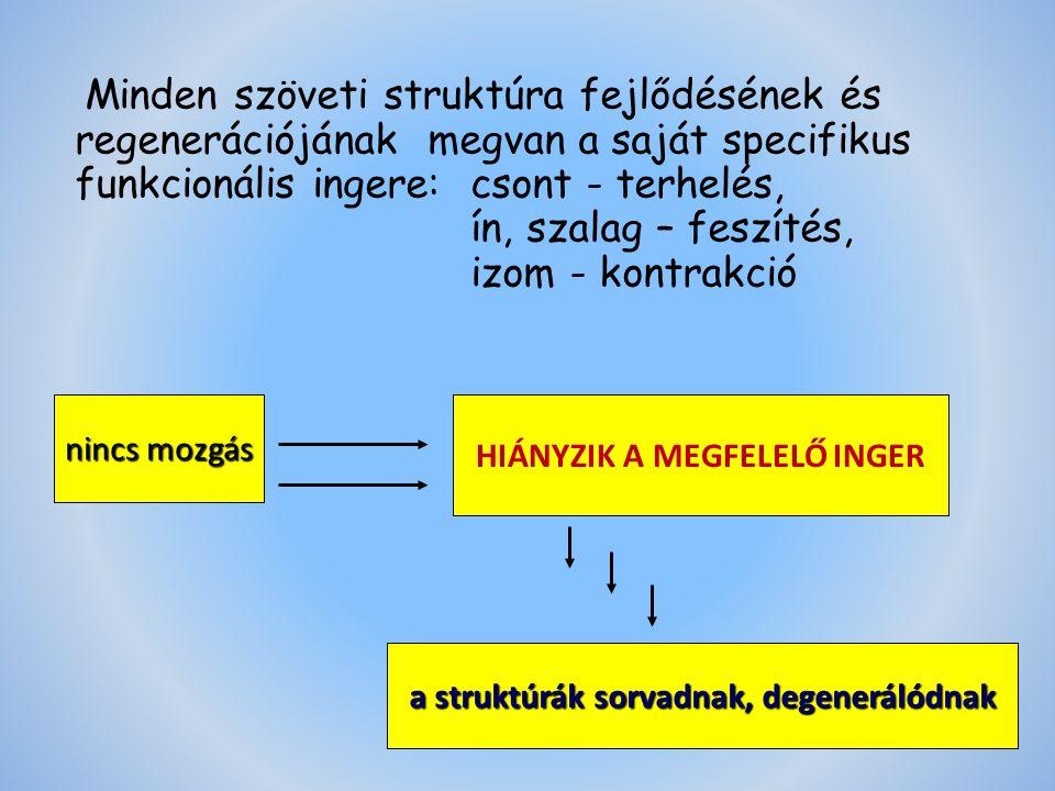 nincs mozgás HIÁNYZIK A MEGFELELŐ INGER a struktúrák sorvadnak, degenerálódnak Minden szöveti struktúra fejlődésének és regenerációjának megvan a saját specifikus funkcionális ingere:csont - terhelés, ín, szalag – feszítés, izom - kontrakció