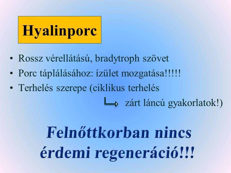 Hyalinporc Rossz vérellátású, bradytroph szövet Porc táplálásához: ízület mozgatása!!!!.