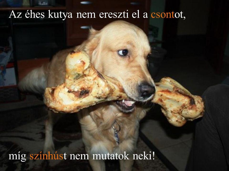 Az éhes kutya nem ereszti el a csontot, míg színhúst nem mutatok neki!