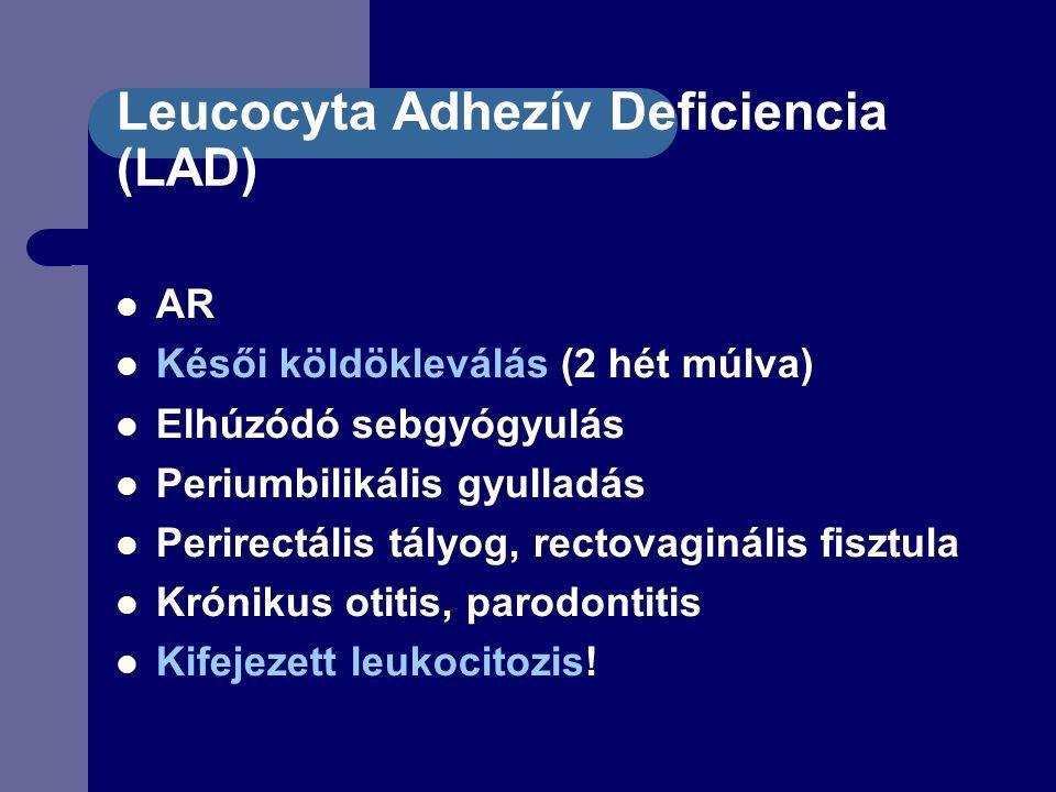 Leucocyta Adhezív Deficiencia (LAD) AR Késői köldökleválás (2 hét múlva) Elhúzódó sebgyógyulás Periumbilikális gyulladás Perirectális tályog, rectovaginális fisztula Krónikus otitis, parodontitis Kifejezett leukocitozis!