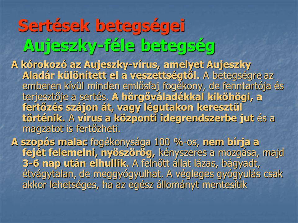 Sertések betegségei Aujeszky-féle betegség A kórokozó az Aujeszky-vírus, amelyet Aujeszky Aladár különített el a veszettségtől.