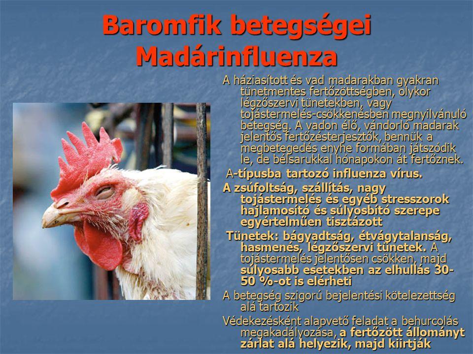 Baromfik betegségei Madárinfluenza A háziasított és vad madarakban gyakran tünetmentes fertőzöttségben, olykor légzőszervi tünetekben, vagy tojástermelés-csökkenésben megnyilvánuló betegség.