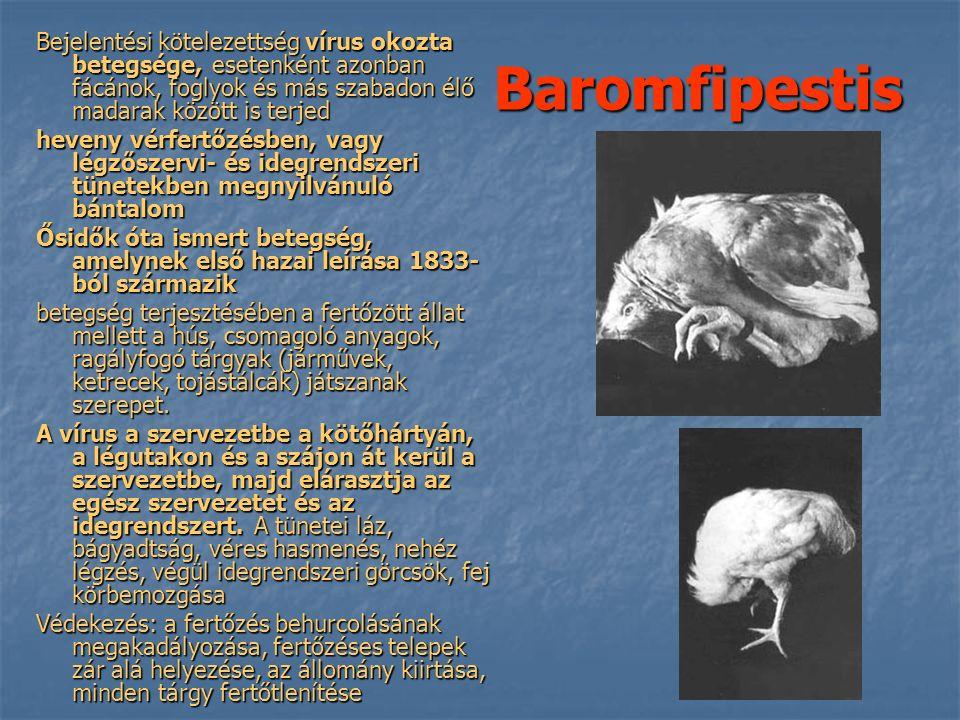 Baromfipestis Bejelentési kötelezettség vírus okozta betegsége, esetenként azonban fácánok, foglyok és más szabadon élő madarak között is terjed heveny vérfertőzésben, vagy légzőszervi- és idegrendszeri tünetekben megnyilvánuló bántalom Ősidők óta ismert betegség, amelynek első hazai leírása 1833- ból származik betegség terjesztésében a fertőzött állat mellett a hús, csomagoló anyagok, ragályfogó tárgyak (járművek, ketrecek, tojástálcák) játszanak szerepet.