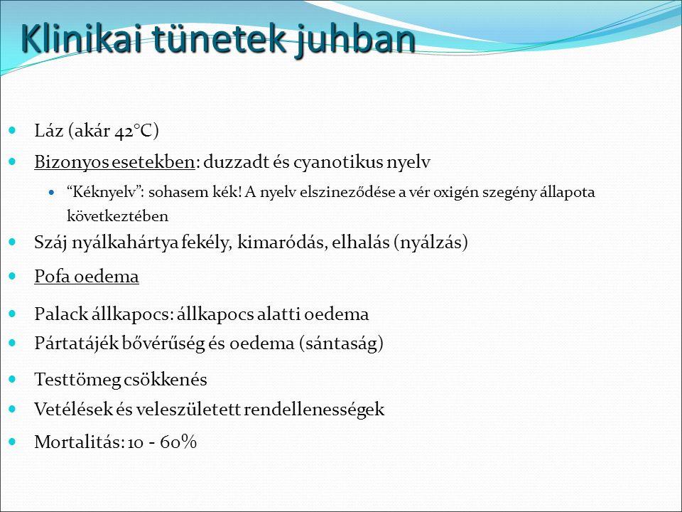 Láz (akár 42°C) Bizonyos esetekben: duzzadt és cyanotikus nyelv Kéknyelv : sohasem kék.